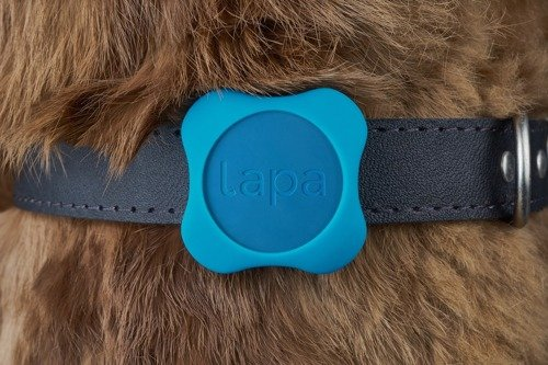 LAPA - Pet Collar